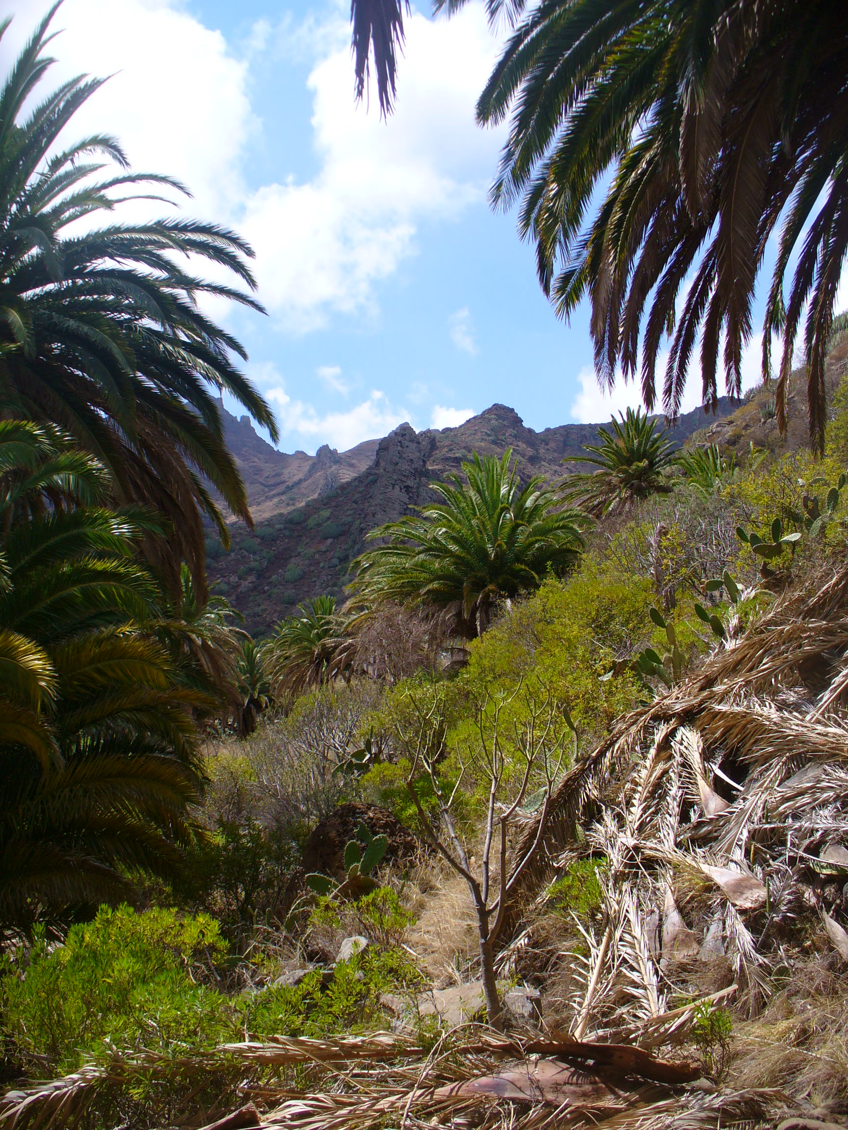 Bajada del Bailadero, Anaga-Tenerife.
